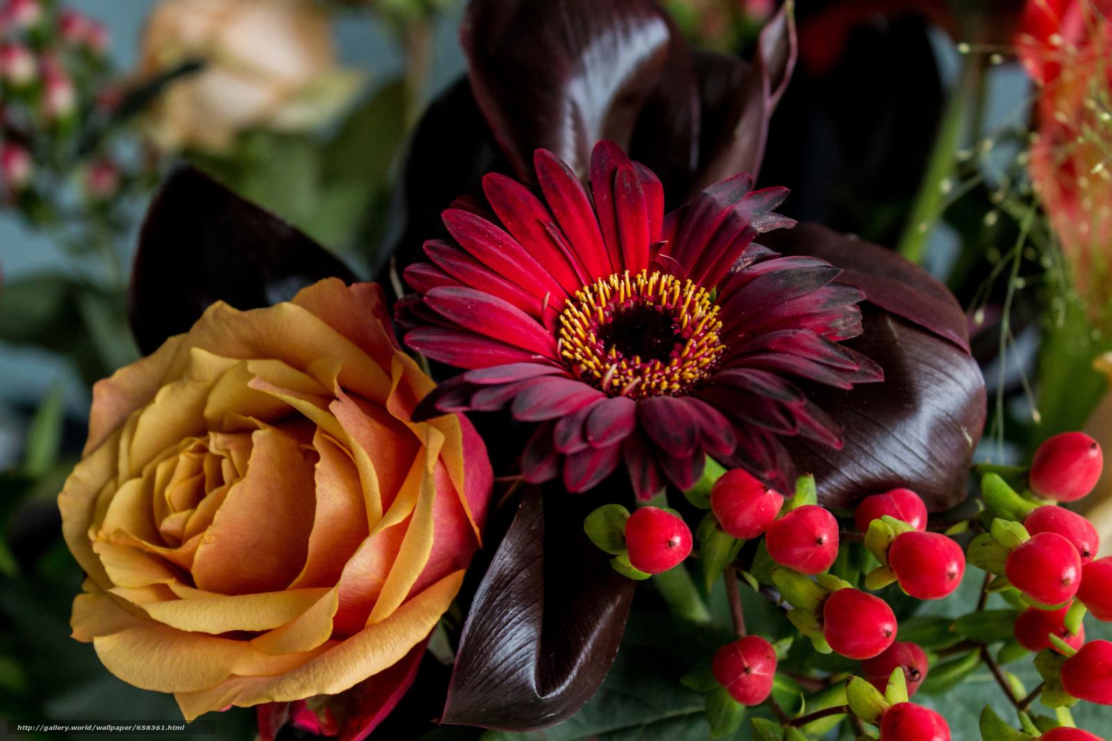 Скачать обои цветок,  цветы,  флора бесплатно для рабочего стола в разрешении 2048x1365 — картинка №658361