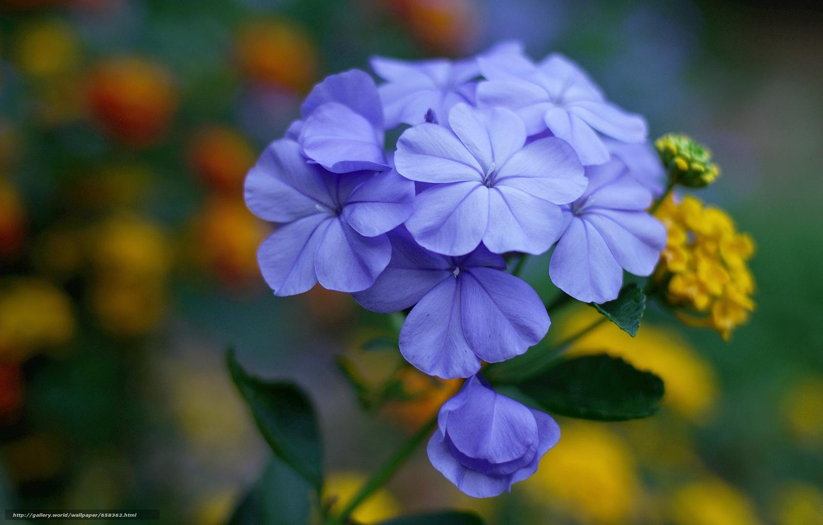 Скачать обои цветок,  цветы,  флора бесплатно для рабочего стола в разрешении 4582x2922 — картинка №658362