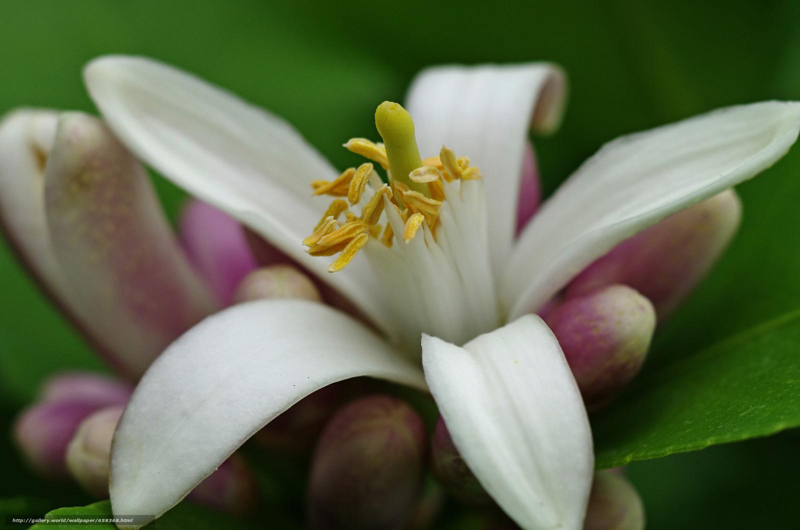 scaricare gli sfondi fiore,  Fiori,  flora,  Giglio Sfondi gratis per la risoluzione del desktop 4928x3264 — immagine №658368