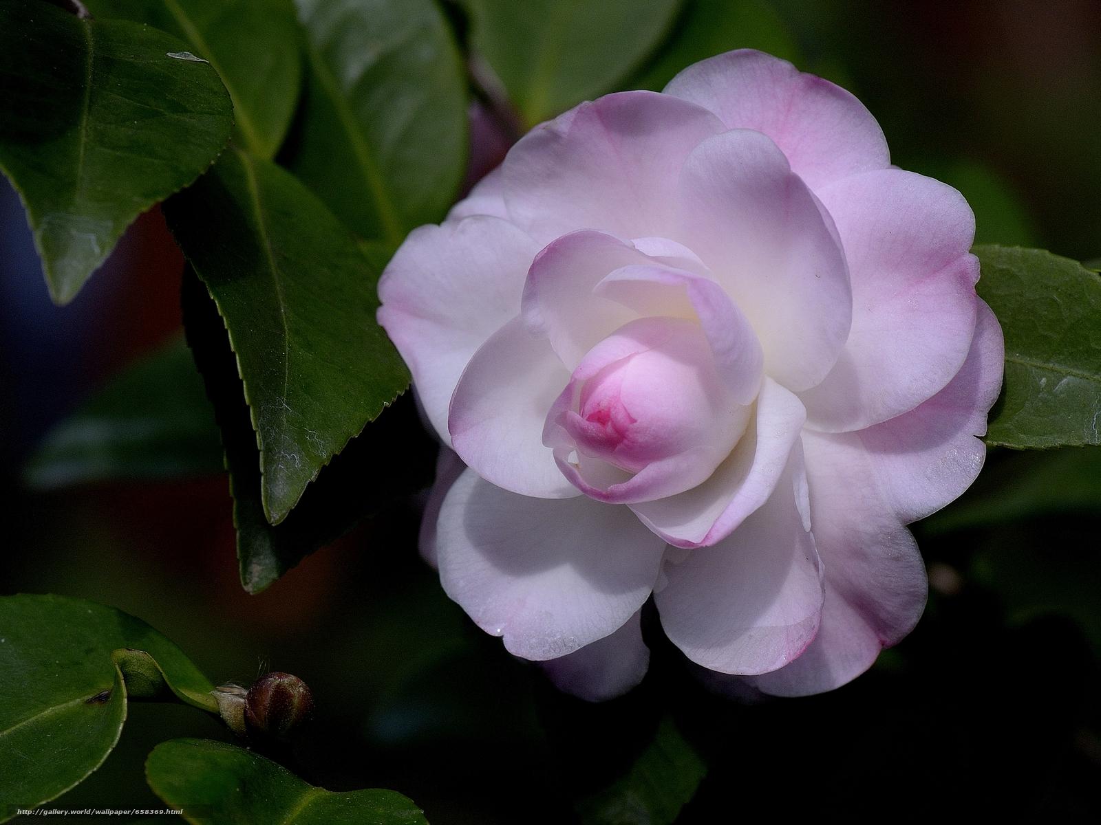 scaricare gli sfondi fiore,  Fiori,  flora Sfondi gratis per la risoluzione del desktop 3699x2774 — immagine №658369