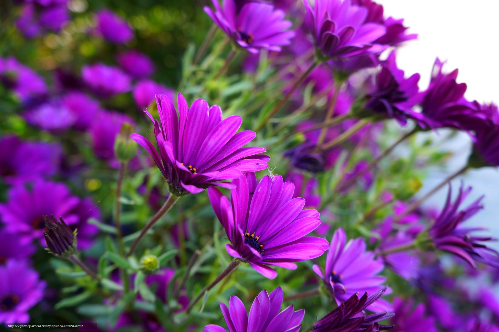 Скачать обои цветок,  цветы,  флора бесплатно для рабочего стола в разрешении 5456x3632 — картинка №658370