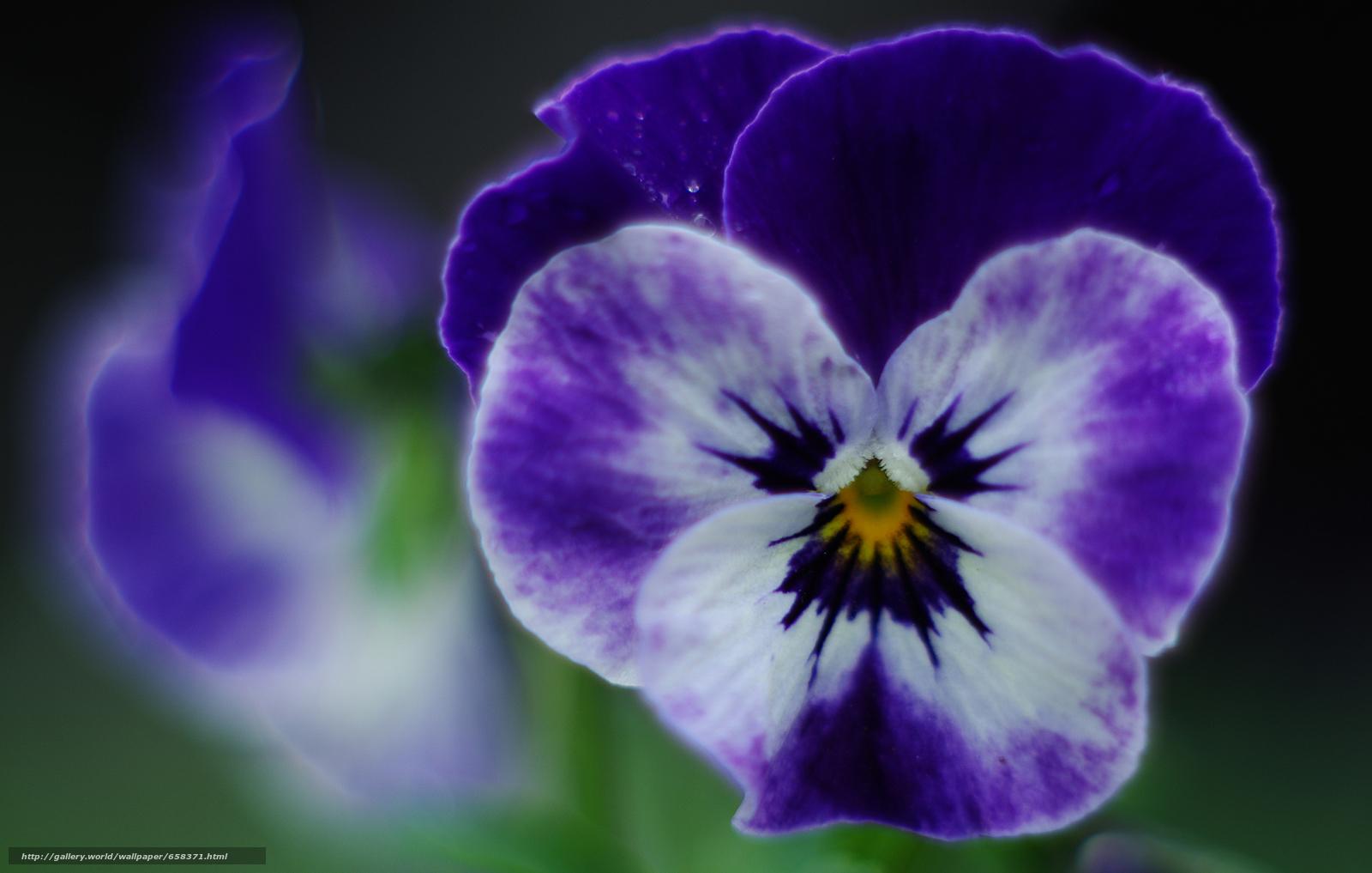 下载壁纸 花,  花卉,  植物群 免费为您的桌面分辨率的壁纸 4705x2990 — 图片 №658371