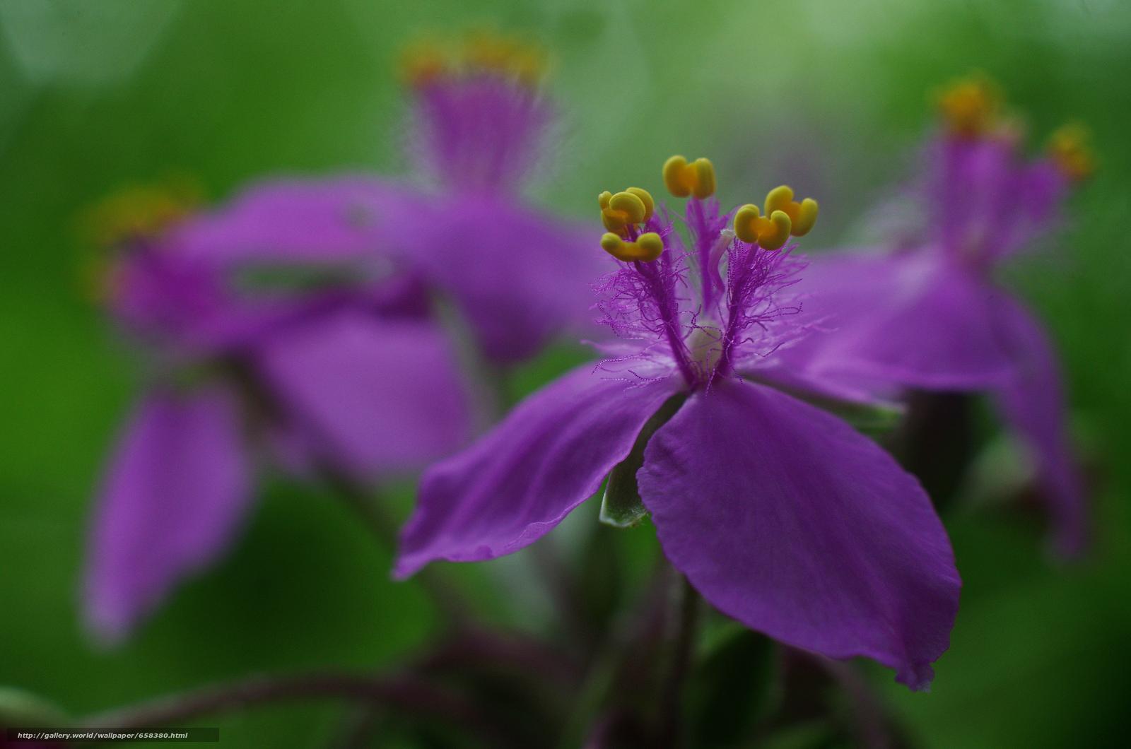 Скачать обои цветок,  цветы,  флора бесплатно для рабочего стола в разрешении 4928x3264 — картинка №658380