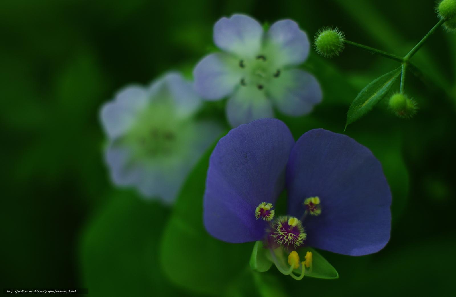 Скачать обои цветок,  цветы,  флора бесплатно для рабочего стола в разрешении 4680x3052 — картинка №658381