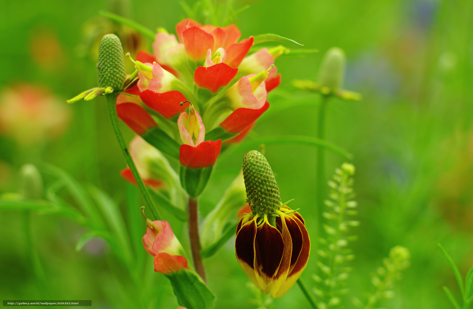 Скачать обои цветок,  цветы,  флора бесплатно для рабочего стола в разрешении 4640x3036 — картинка №658383