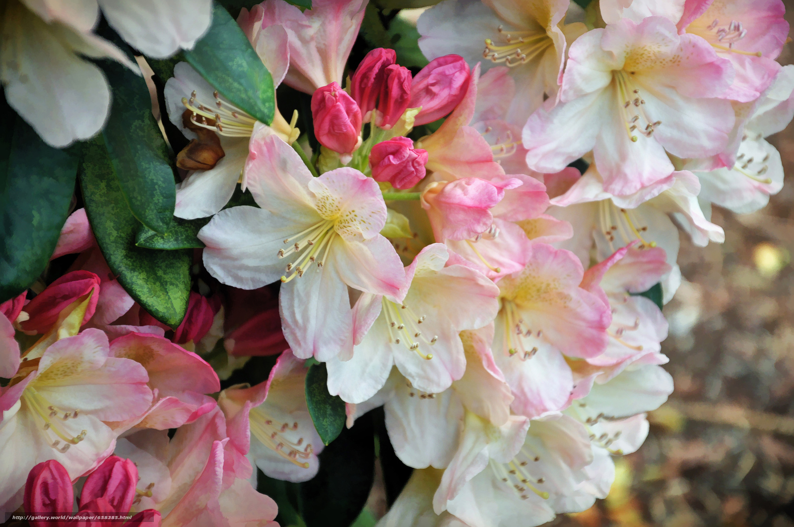 壁紙をダウンロード 花,  フラワーズ,  フローラ,  桜 デスクトップの解像度のための無料壁紙 4288x2848 — 絵 №658385