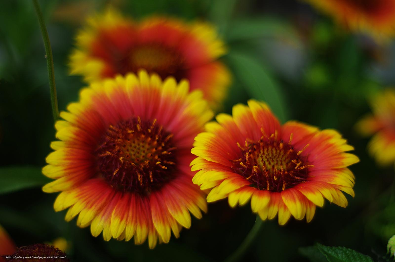 Скачать обои цветок,  цветы,  флора бесплатно для рабочего стола в разрешении 4928x3264 — картинка №658387