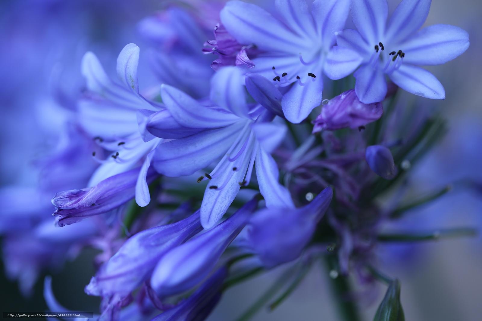 Скачать обои цветок,  цветы,  флора бесплатно для рабочего стола в разрешении 3840x2560 — картинка №658388