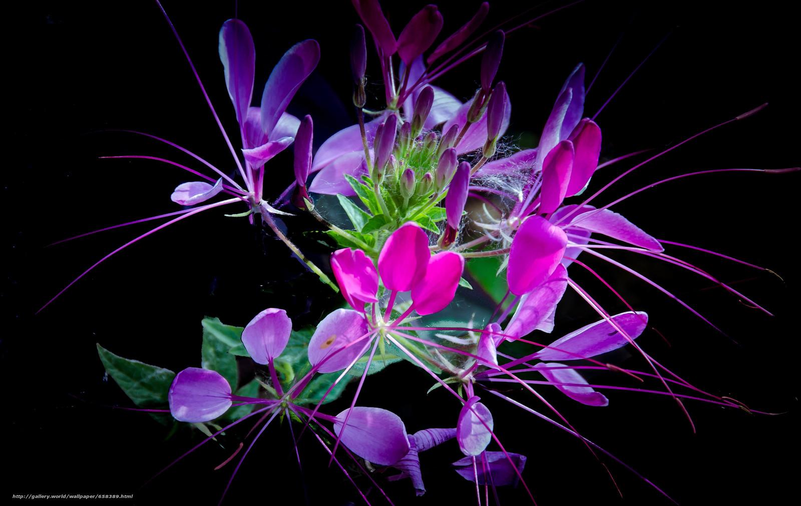 Скачать обои цветок,  цветы,  флора бесплатно для рабочего стола в разрешении 3765x2380 — картинка №658389