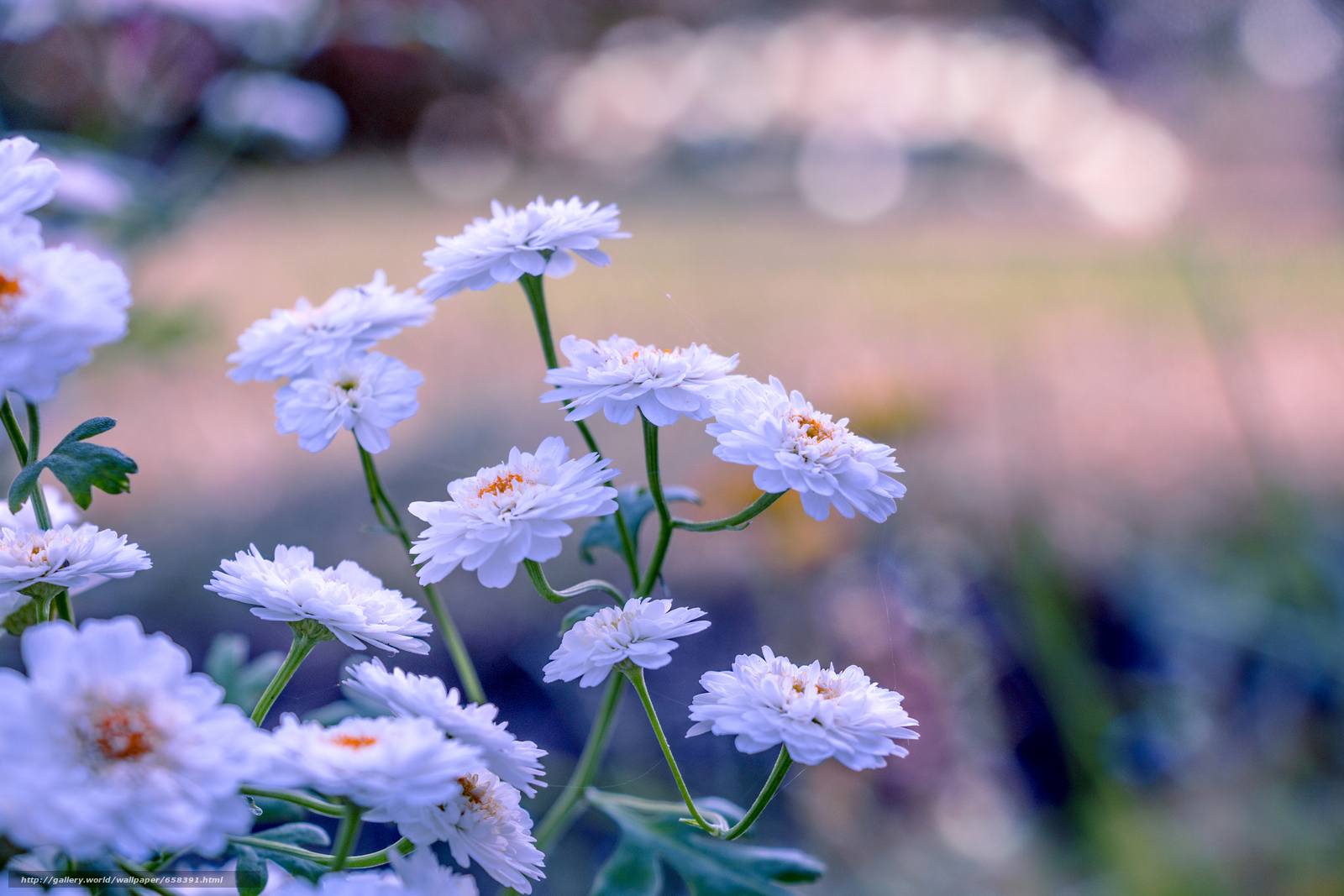 pobra tapety kwiat,  Kwiaty,  flora Darmowe tapety na pulpit rozdzielczoci 2472x1648 — zdjcie №658391