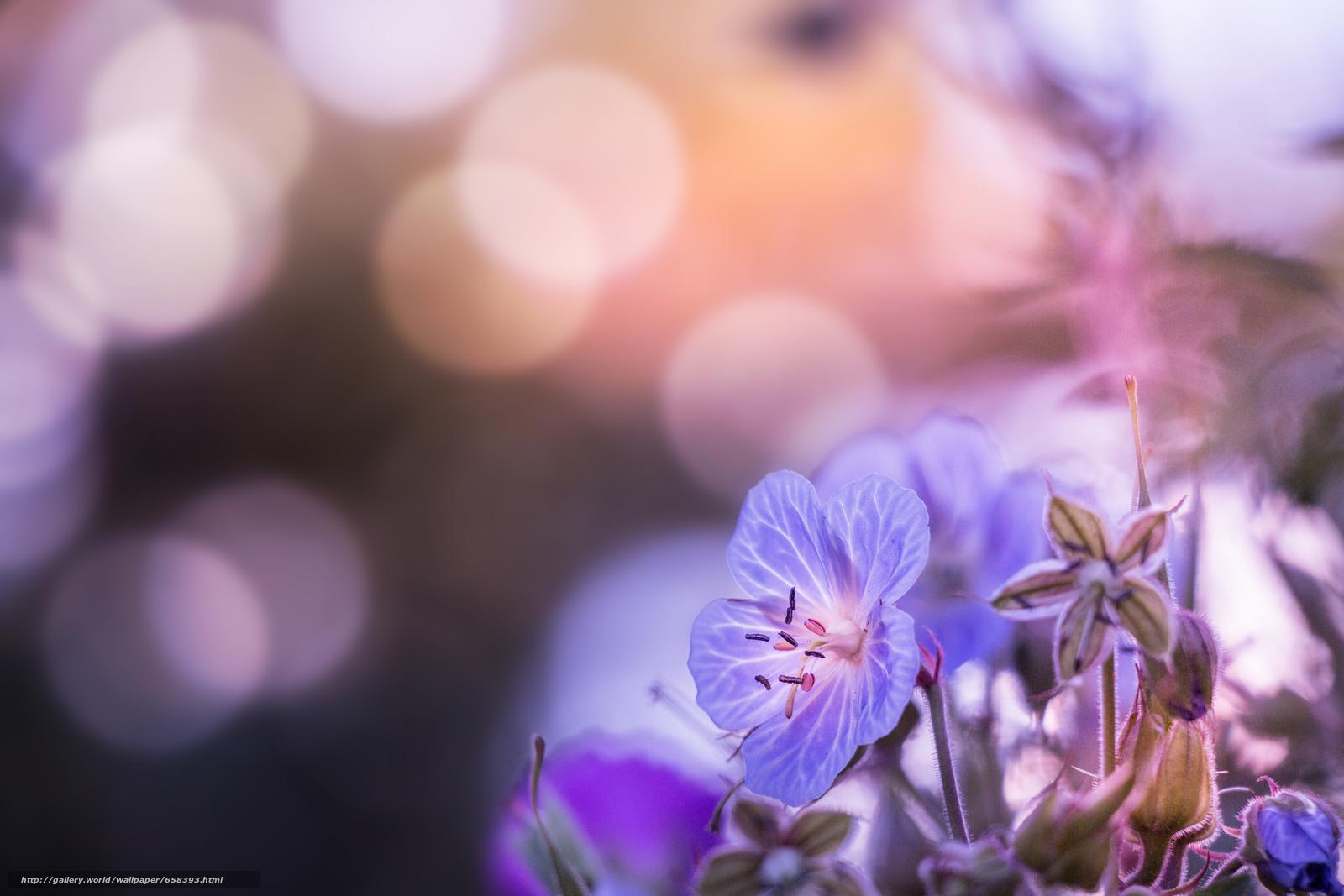 scaricare gli sfondi fiore,  Fiori,  flora Sfondi gratis per la risoluzione del desktop 2472x1648 — immagine №658393