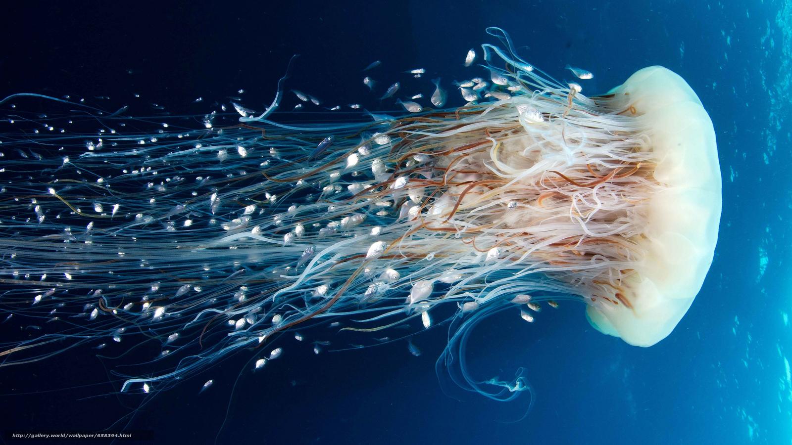 Descargar gratis medusa,  Medusa,  Mundial de Actividades Subacuáticas,  agua Fondos de escritorio en la resolucin 5000x2812 — imagen №658394