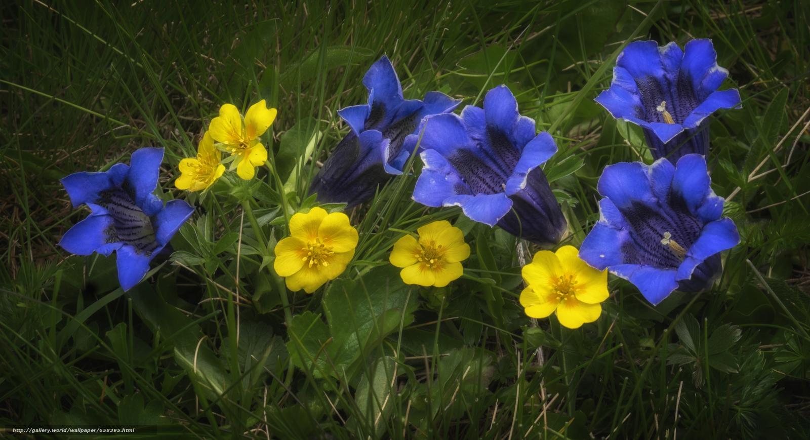 scaricare gli sfondi fiore,  Fiori,  flora Sfondi gratis per la risoluzione del desktop 4896x2659 — immagine №658395