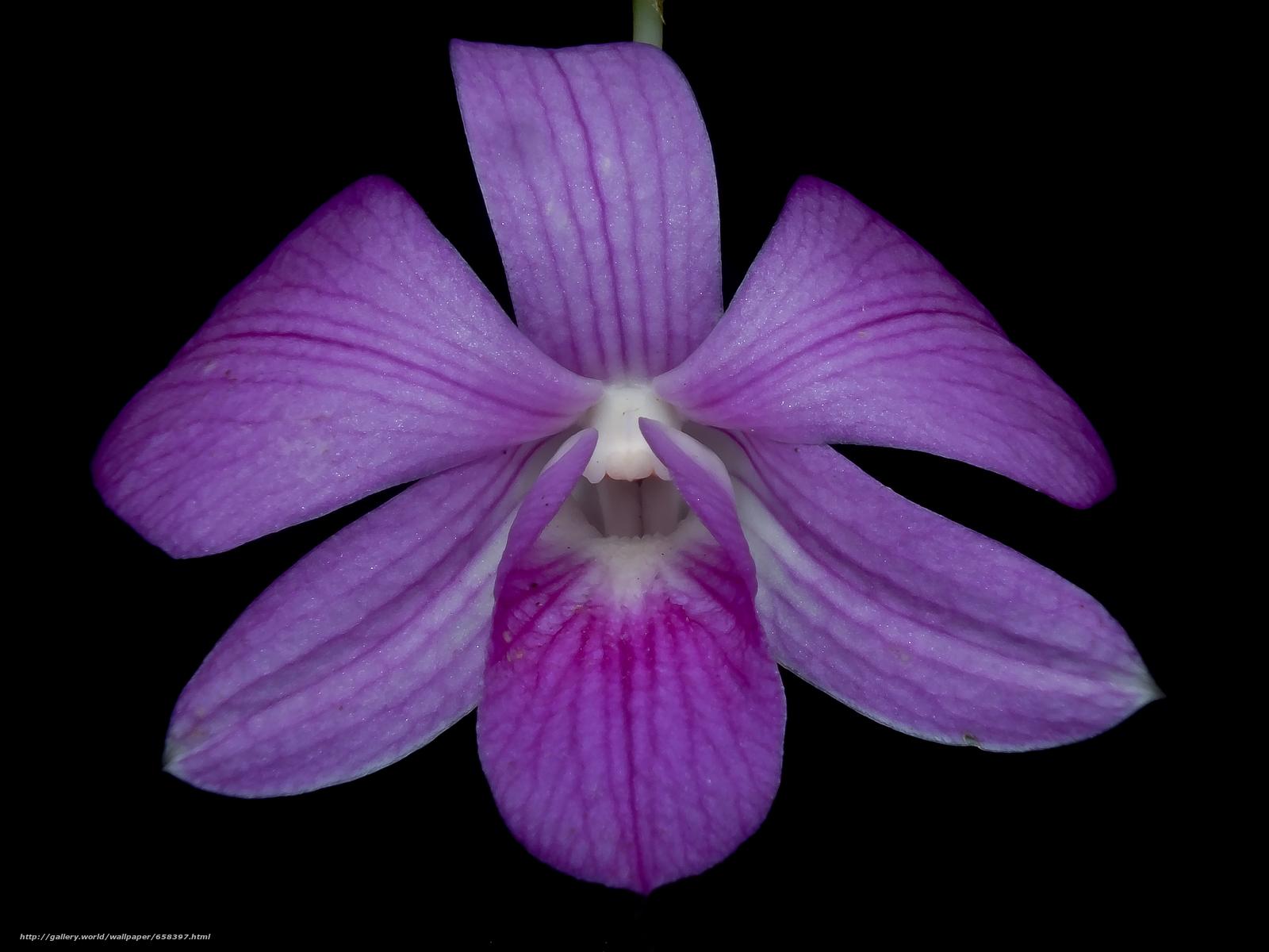 Tlcharger Fond d'ecran fleur,  Fleurs,  flore Fonds d'ecran gratuits pour votre rsolution du bureau 4608x3456 — image №658397