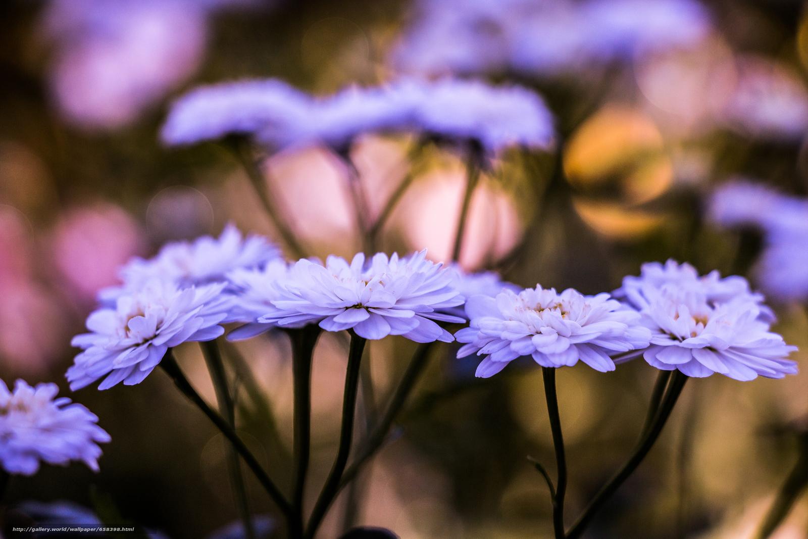 scaricare gli sfondi fiore,  Fiori,  flora Sfondi gratis per la risoluzione del desktop 5472x3648 — immagine №658398