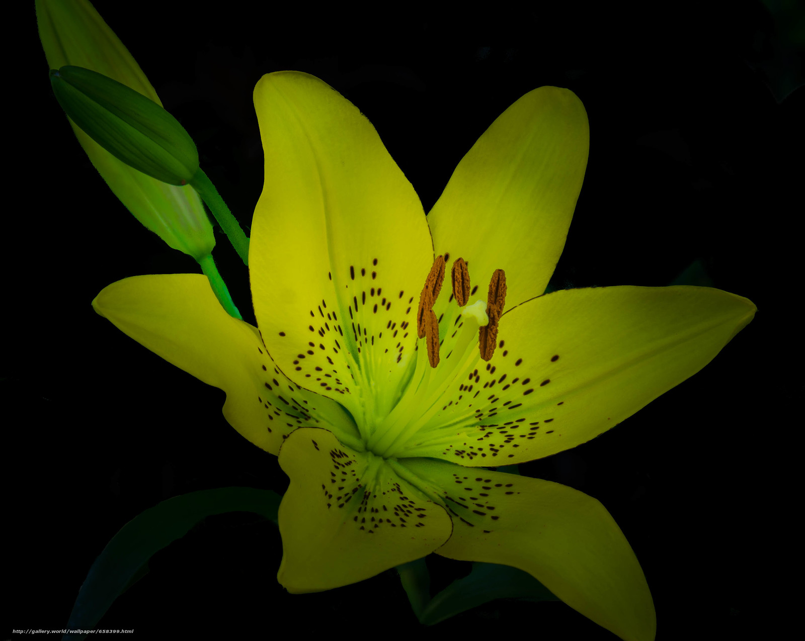 Download wallpaper flower,  Flowers,  flora free desktop wallpaper in the resolution 3602x2871 — picture №658399