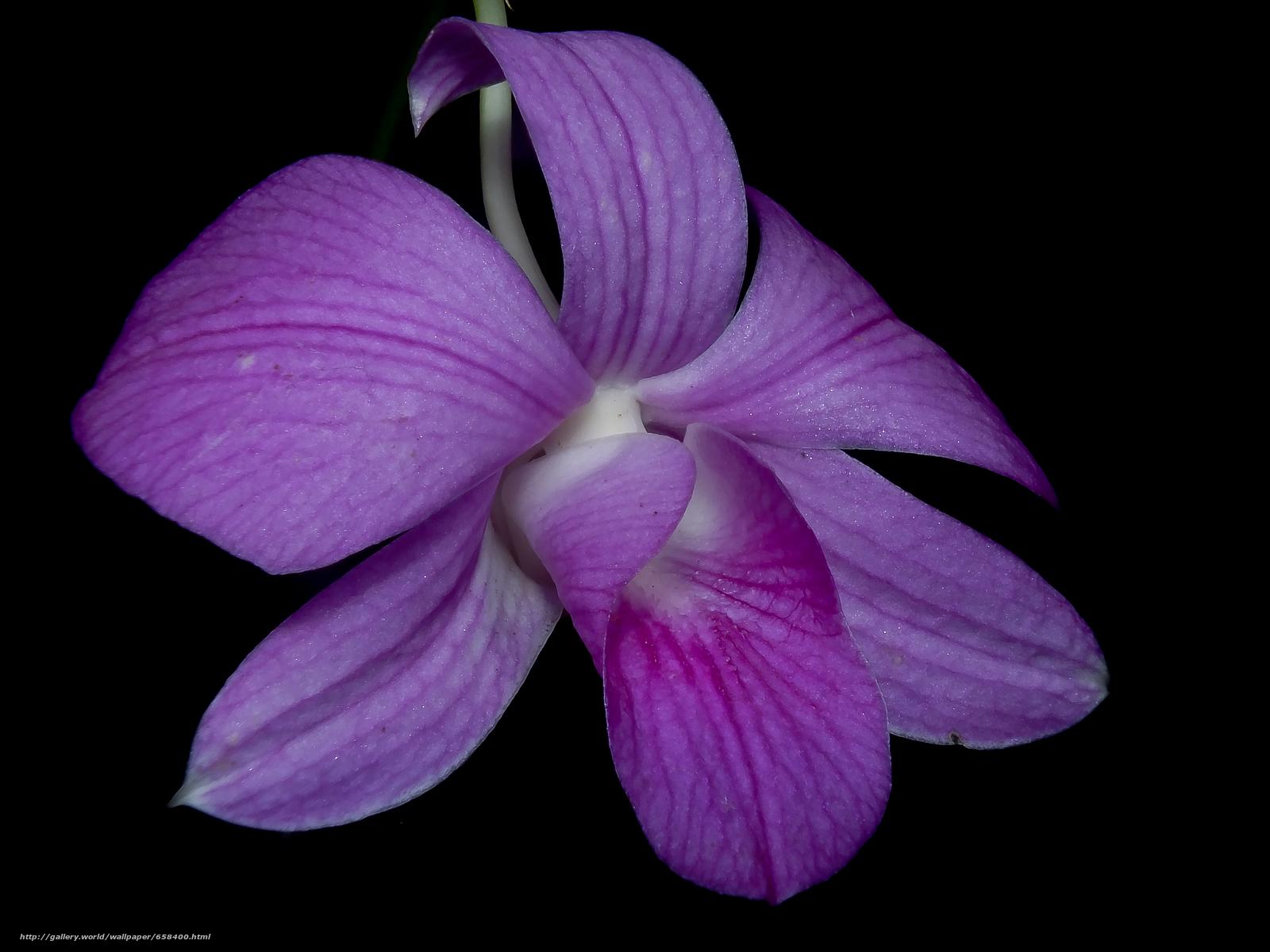 壁紙をダウンロード 花,  フラワーズ,  フローラ デスクトップの解像度のための無料壁紙 4608x3456 — 絵 №658400