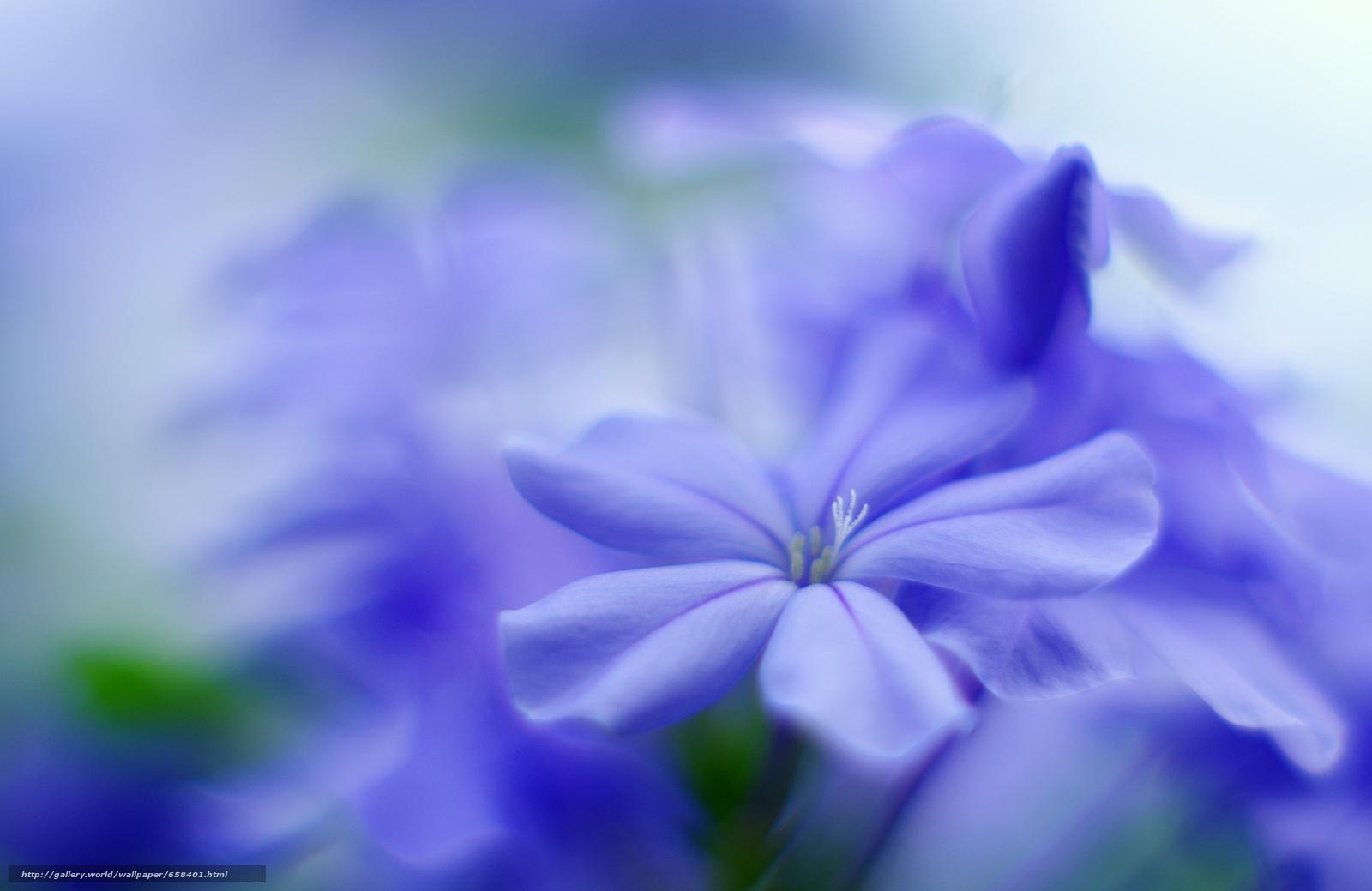 Tlcharger Fond d'ecran fleur,  Fleurs,  flore Fonds d'ecran gratuits pour votre rsolution du bureau 4252x2761 — image №658401