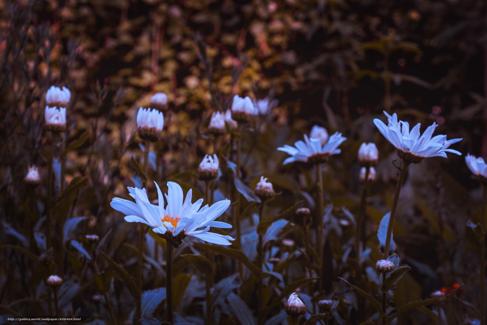 scaricare gli sfondi fiore,  Fiori,  flora Sfondi gratis per la risoluzione del desktop 2472x1648 — immagine №658404