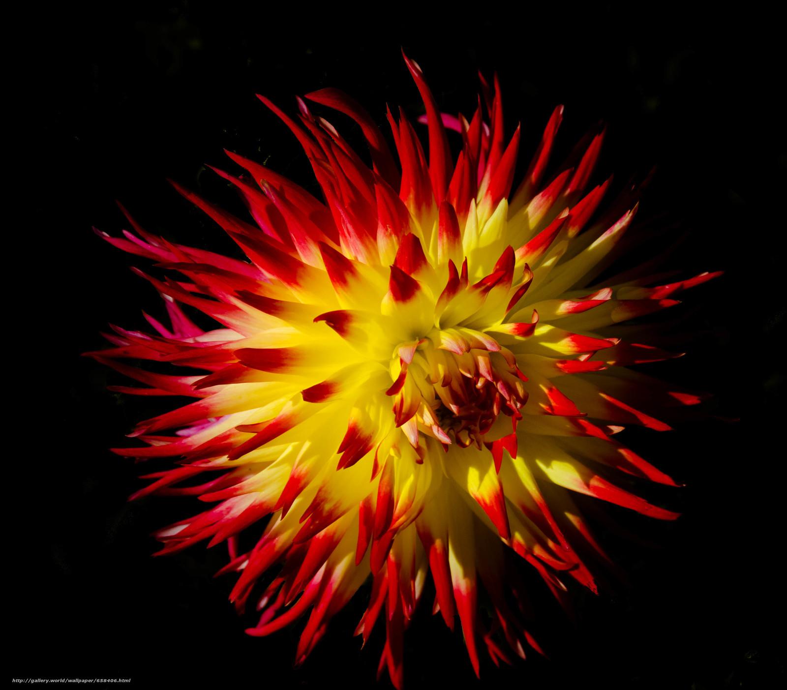 Download wallpaper flower,  Flowers,  flora,  dahlia free desktop wallpaper in the resolution 3337x2926 — picture №658406