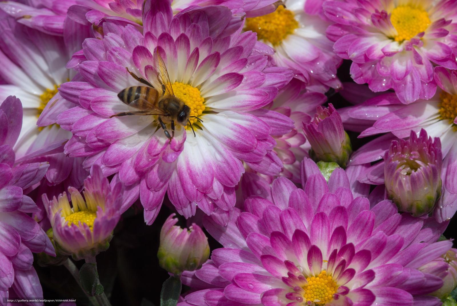 scaricare gli sfondi fiore,  Fiori,  flora Sfondi gratis per la risoluzione del desktop 2000x1341 — immagine №658408