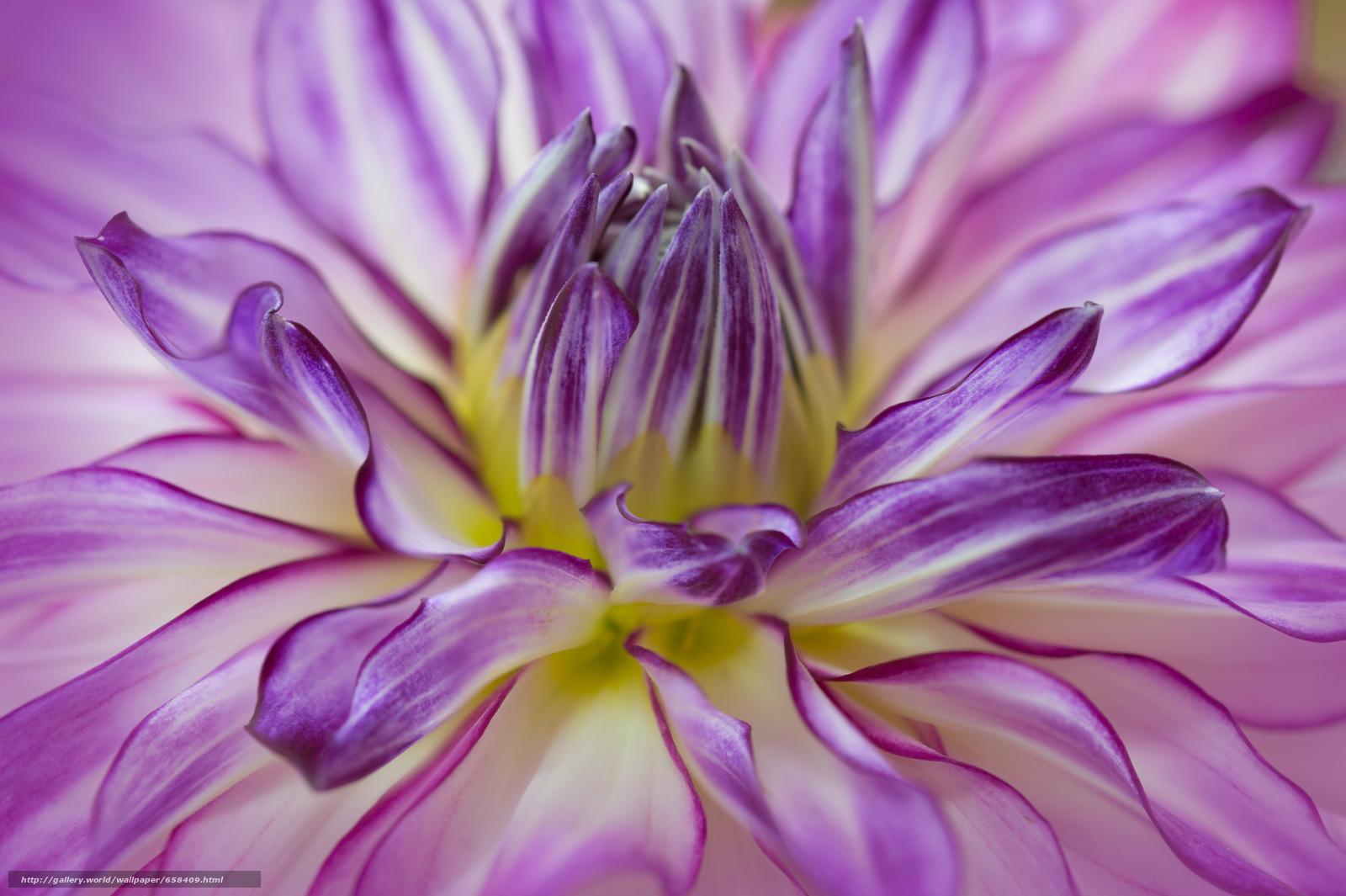 scaricare gli sfondi fiore,  Fiori,  flora Sfondi gratis per la risoluzione del desktop 2000x1331 — immagine №658409