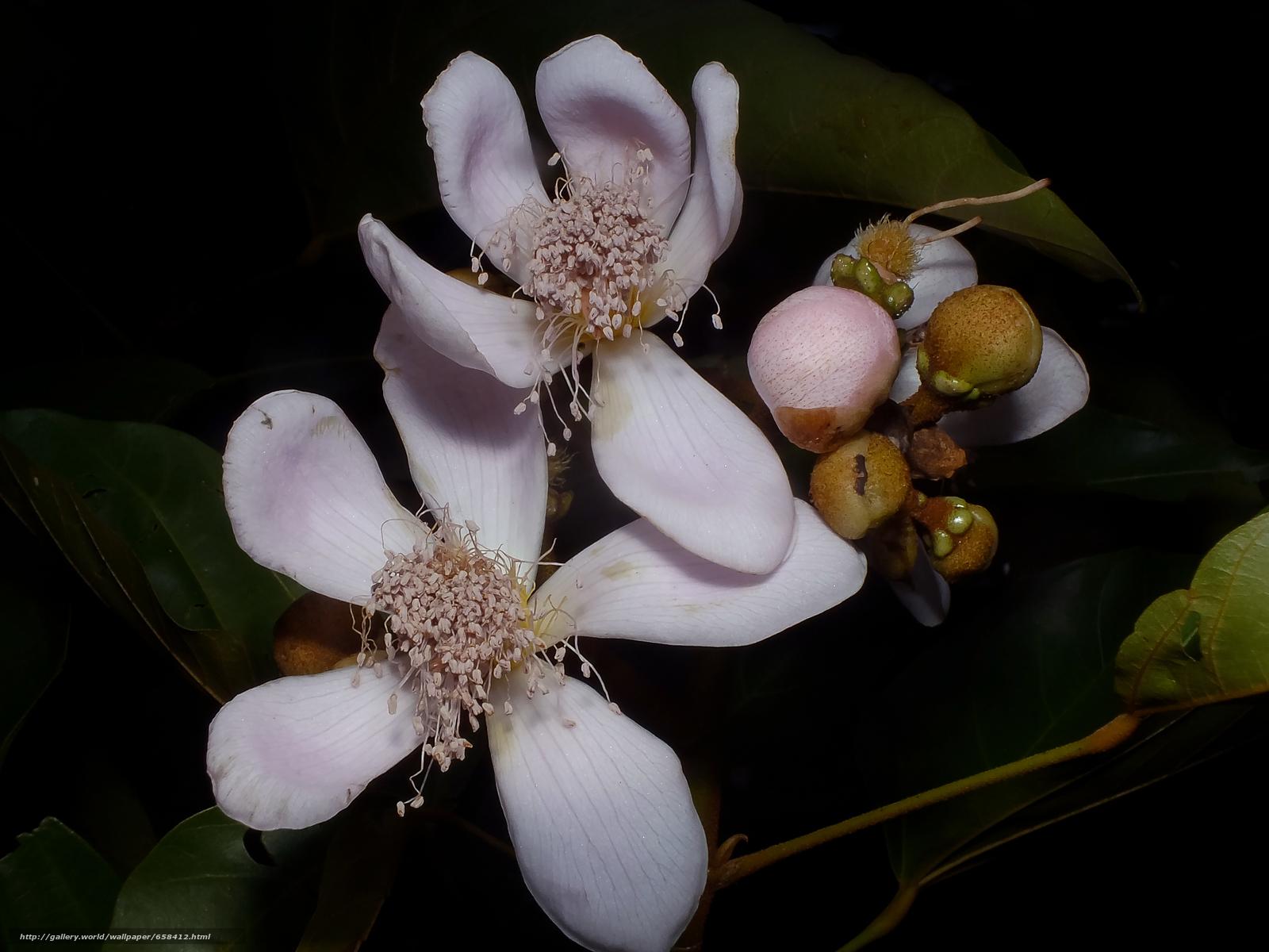 Tlcharger Fond d'ecran fleur,  Fleurs,  flore Fonds d'ecran gratuits pour votre rsolution du bureau 4608x3456 — image №658412