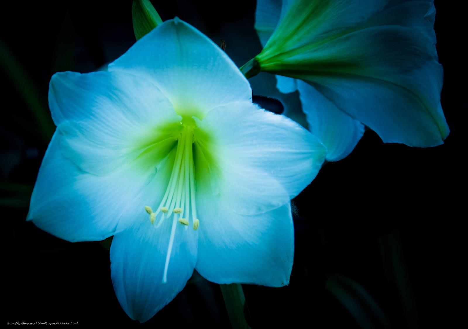 Descargar gratis flor,  Flores,  flora Fondos de escritorio en la resolucin 4169x2935 — imagen №658414