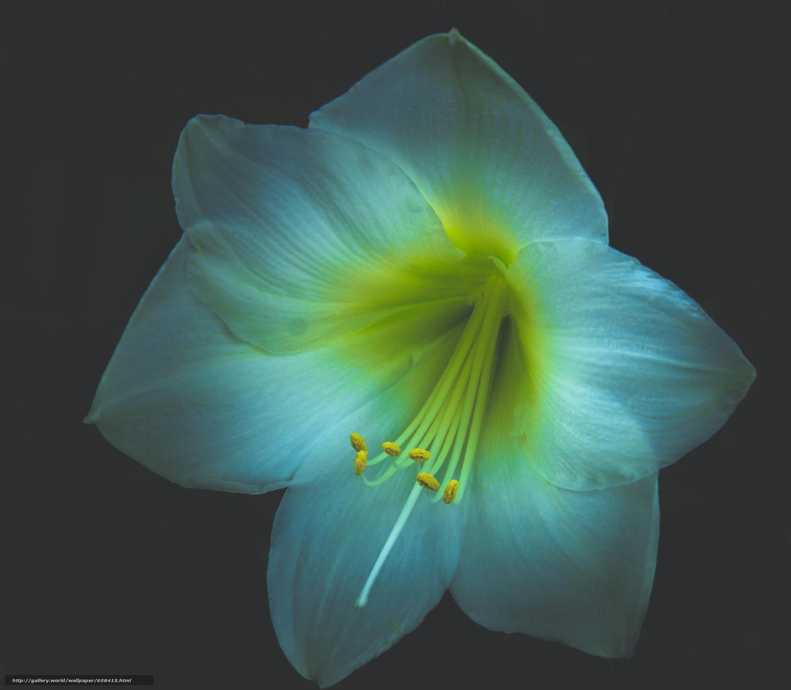 scaricare gli sfondi fiore,  Fiori,  flora Sfondi gratis per la risoluzione del desktop 3227x2816 — immagine №658415