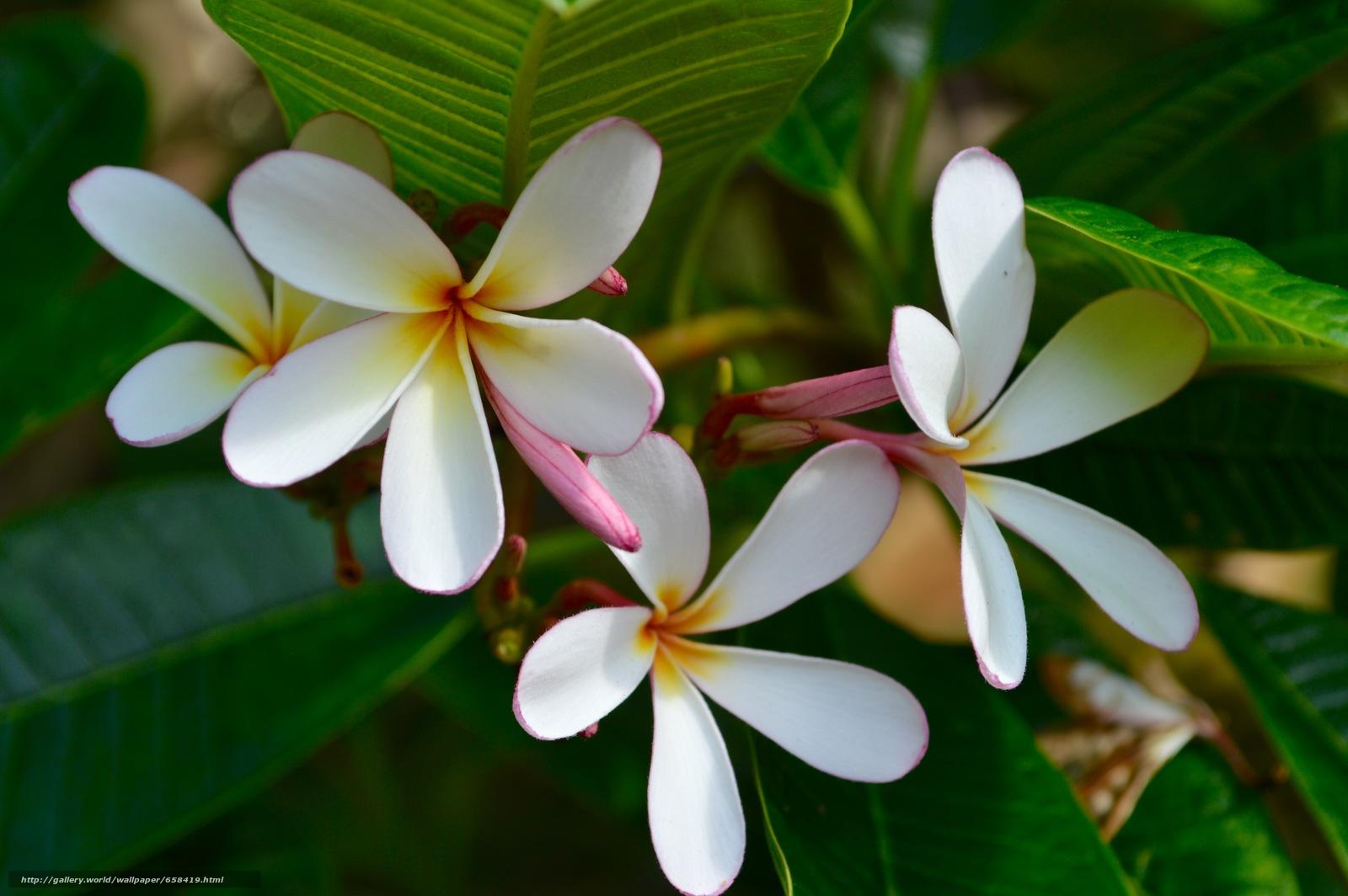 Скачать обои цветок,  цветы,  флора бесплатно для рабочего стола в разрешении 6016x4000 — картинка №658419