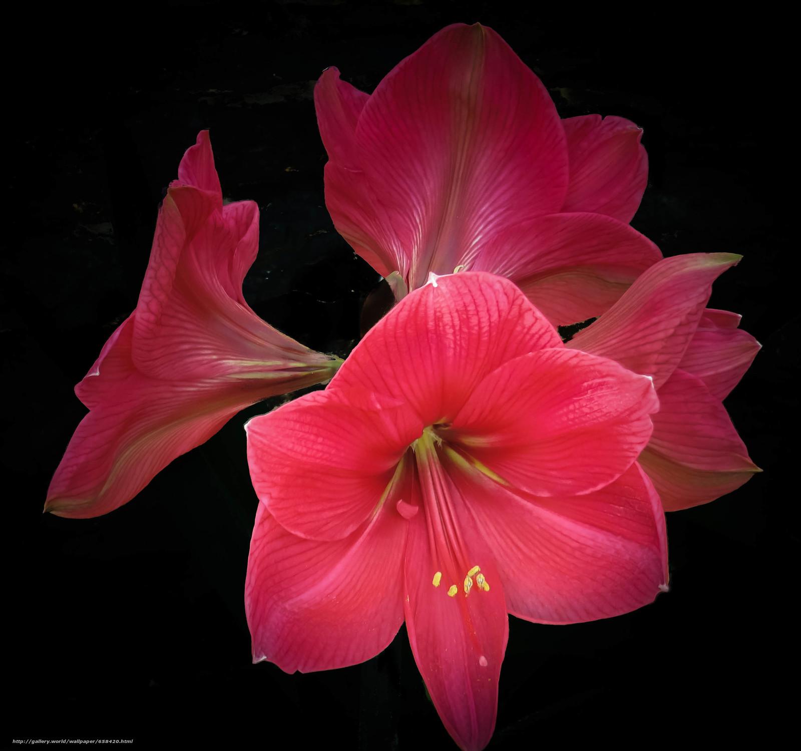 Download Hintergrund Blume,  Blumen,  flora Freie desktop Tapeten in der Auflosung 2950x2765 — bild №658420