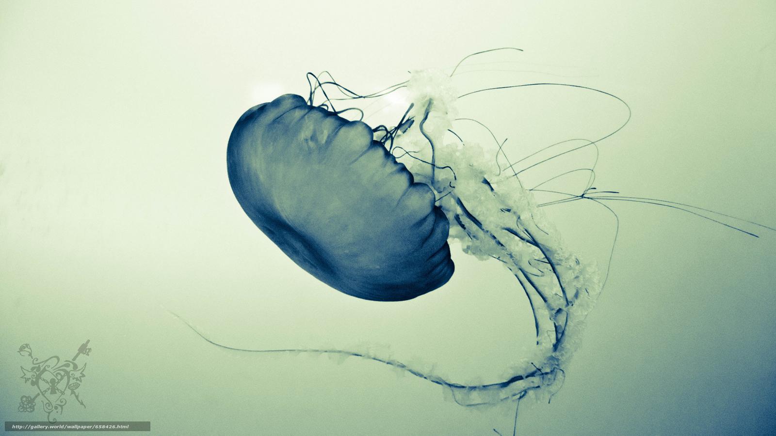 scaricare gli sfondi meduse,  Medusa,  Mondo subacqueo,  acqua Sfondi gratis per la risoluzione del desktop 5000x2812 — immagine №658426