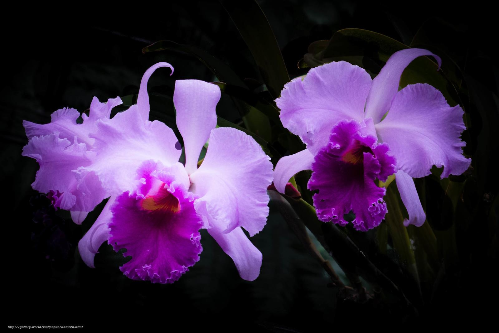 Скачать обои цветок,  цветы,  флора бесплатно для рабочего стола в разрешении 2900x1935 — картинка №658428