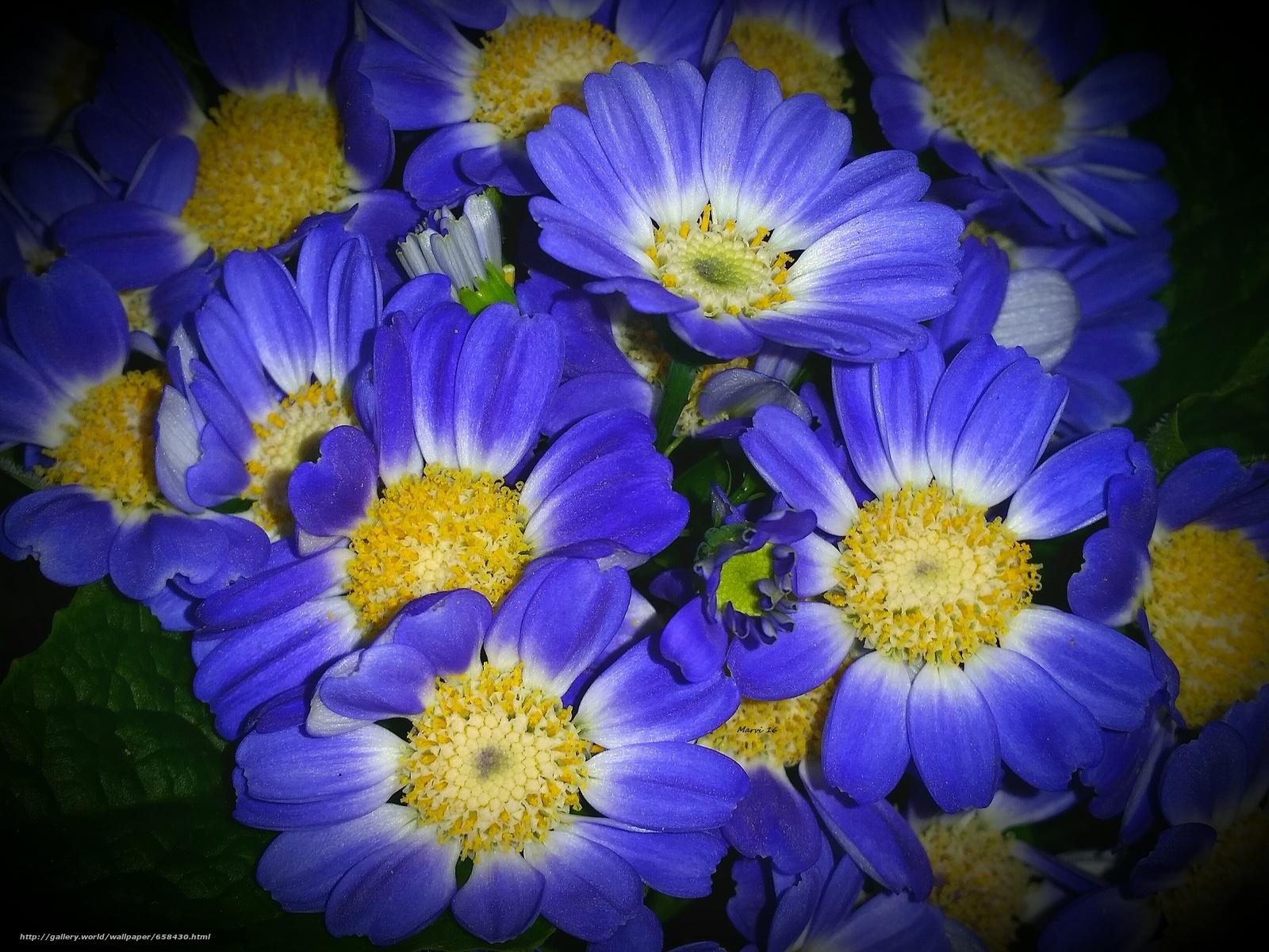 scaricare gli sfondi fiore,  Fiori,  flora Sfondi gratis per la risoluzione del desktop 1959x1470 — immagine №658430
