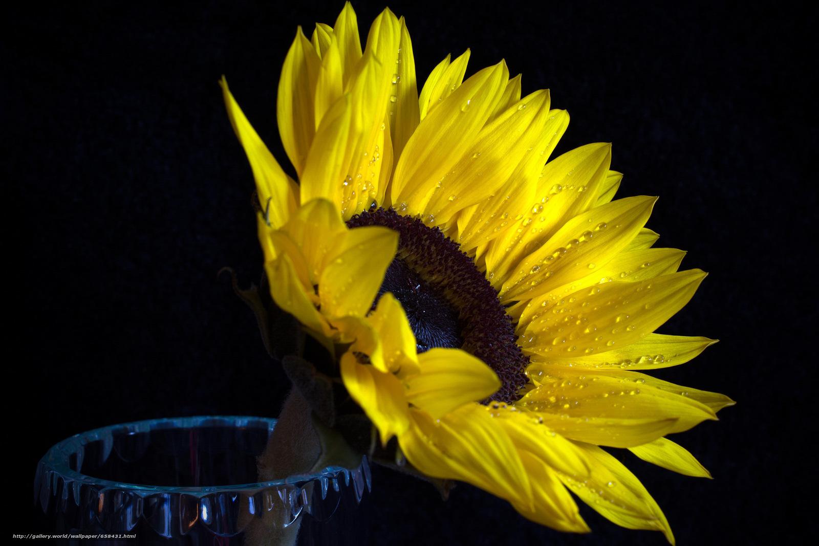 Download wallpaper flower,  Flowers,  flora free desktop wallpaper in the resolution 6000x4000 — picture №658431