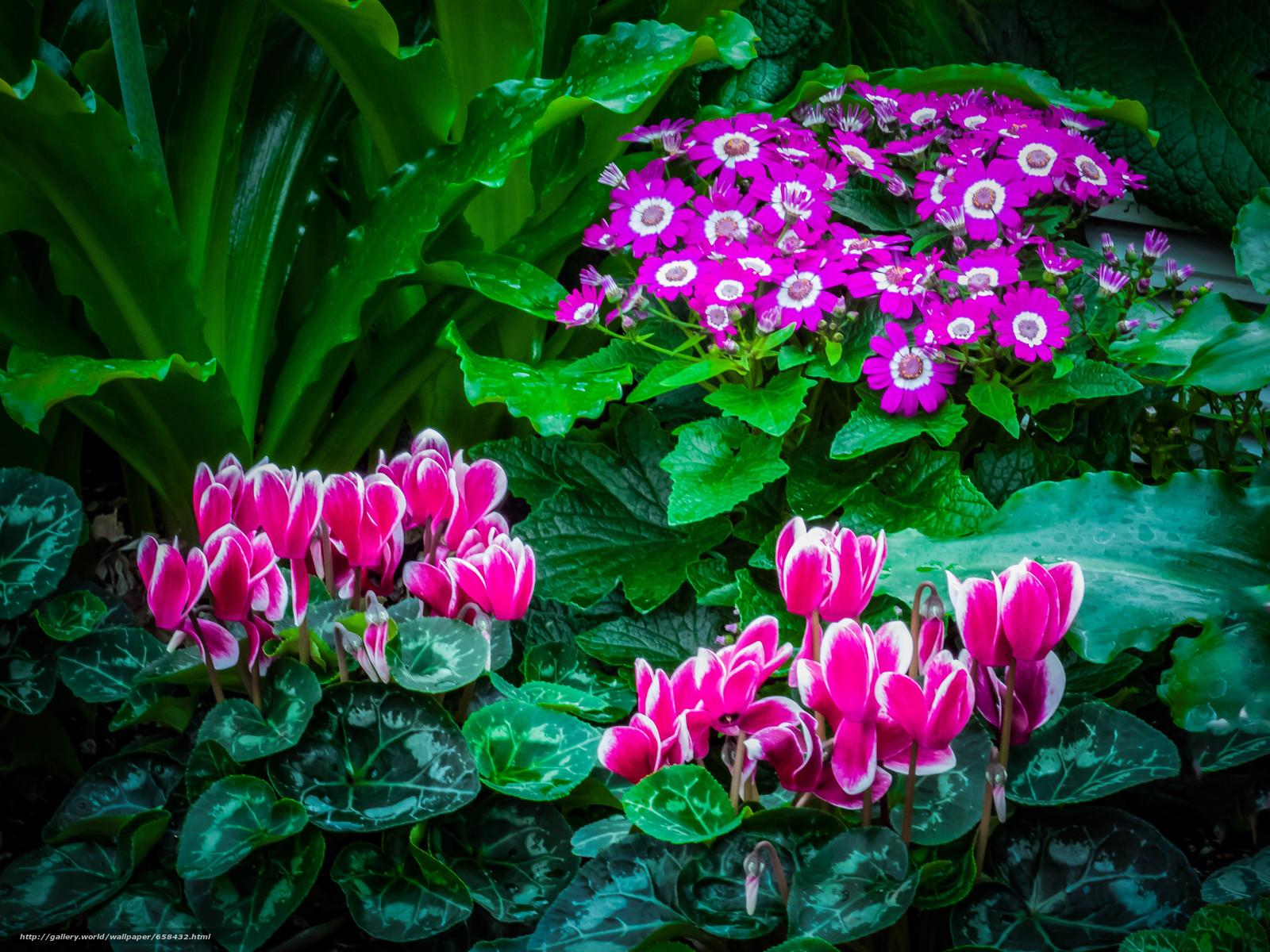 Descargar gratis flor,  Flores,  flora Fondos de escritorio en la resolucin 3968x2976 — imagen №658432