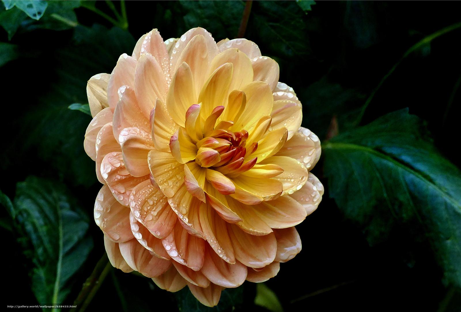 Скачать обои цветок,  цветы,  флора бесплатно для рабочего стола в разрешении 4000x2706 — картинка №658433