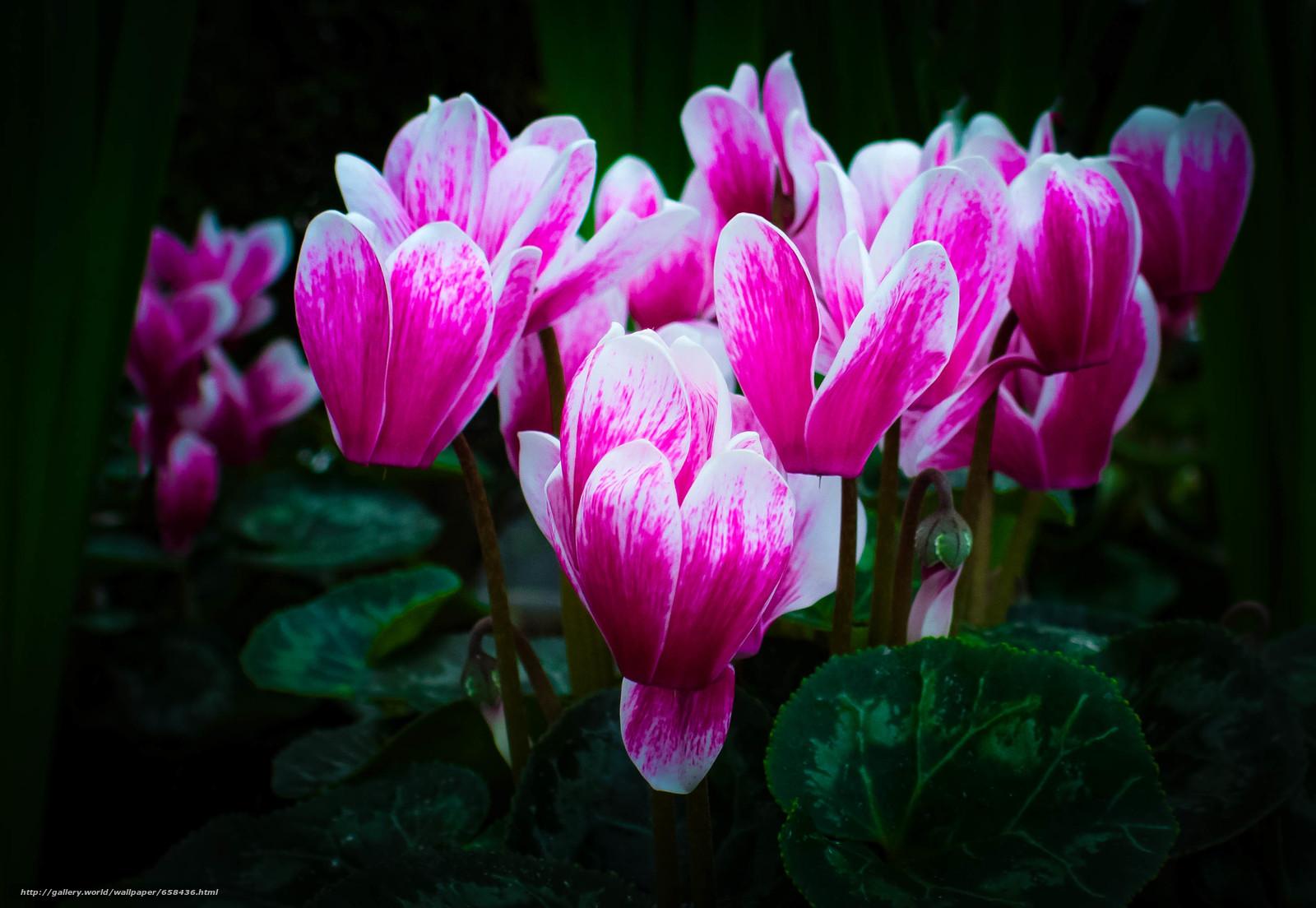 Скачать обои цветок,  цветы,  флора бесплатно для рабочего стола в разрешении 2933x2024 — картинка №658436