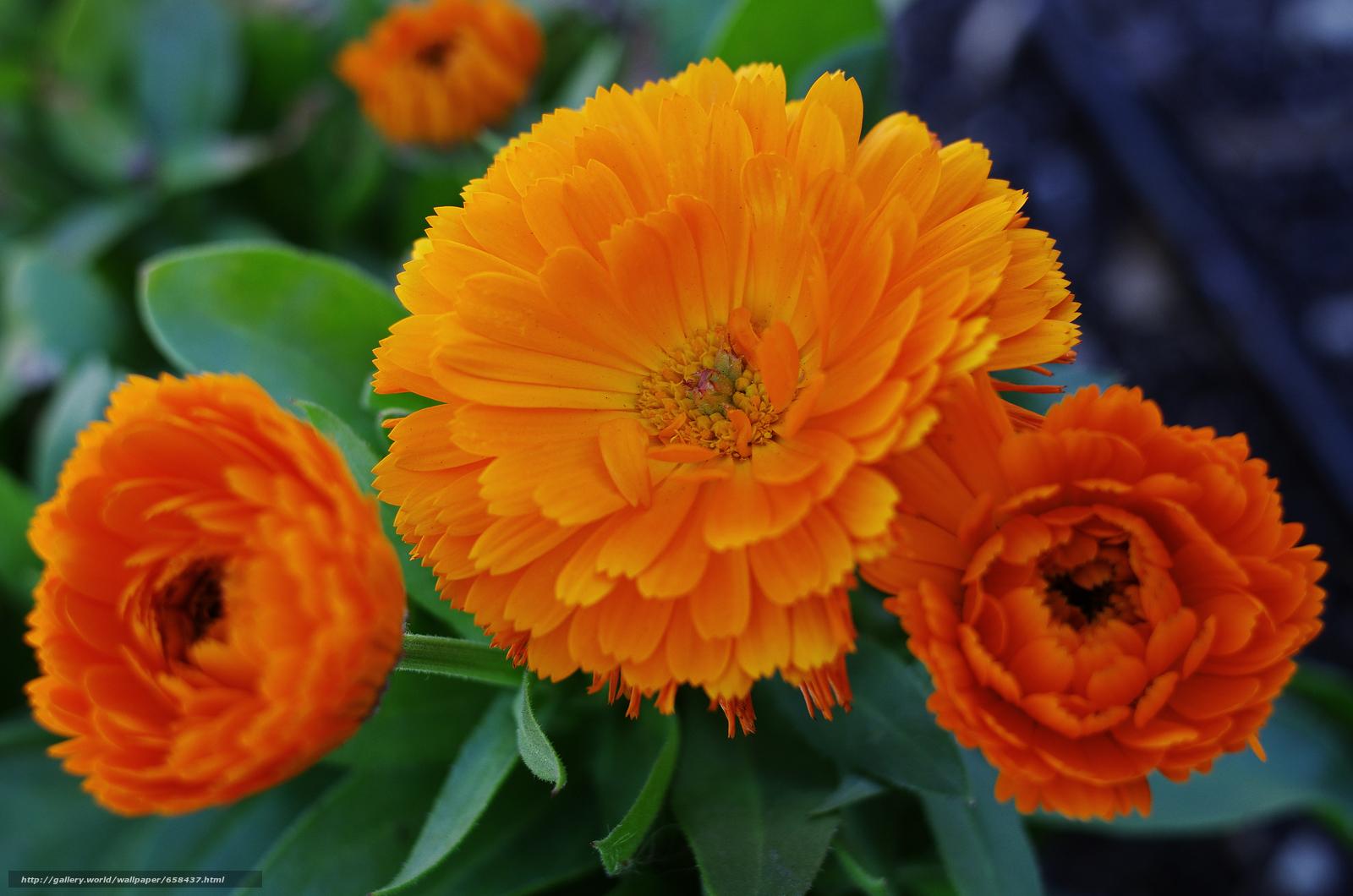 下载壁纸 花,  花卉,  植物群 免费为您的桌面分辨率的壁纸 4673x3095 — 图片 №658437