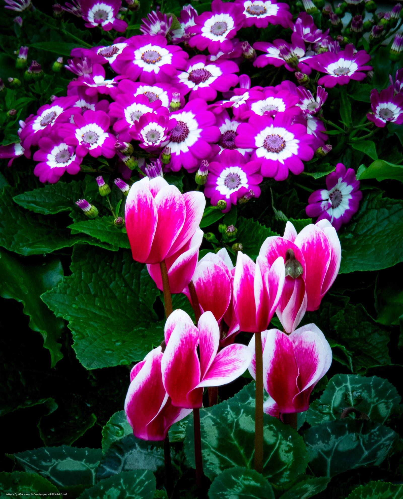 Descargar gratis flor,  Flores,  flora Fondos de escritorio en la resolucin 2909x3600 — imagen №658438