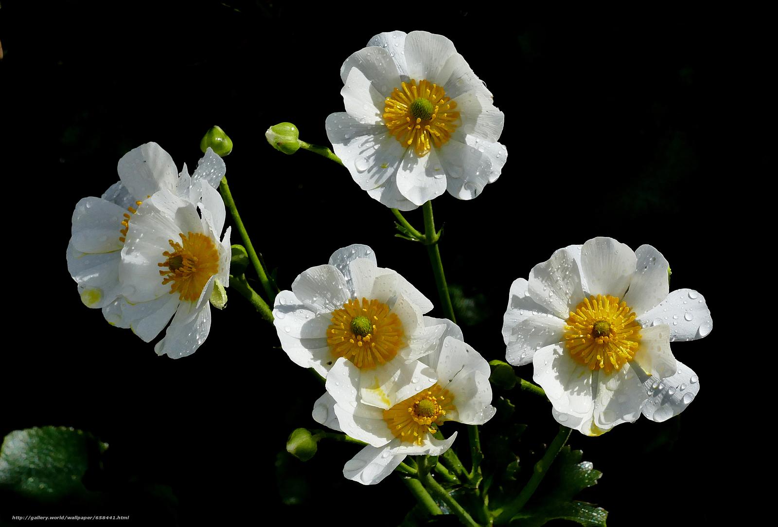 壁紙をダウンロード 花,  フラワーズ,  フローラ デスクトップの解像度のための無料壁紙 4000x2708 — 絵 №658441