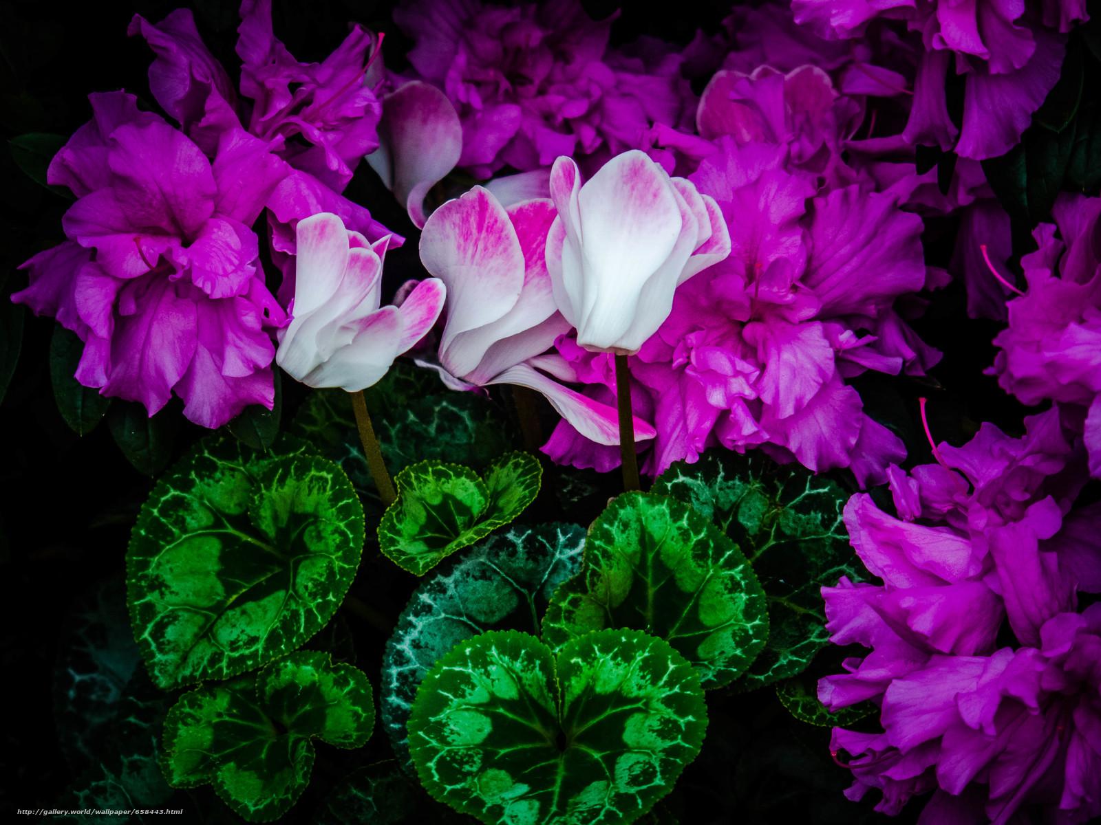 Скачать обои цветок,  цветы,  флора бесплатно для рабочего стола в разрешении 3968x2976 — картинка №658443