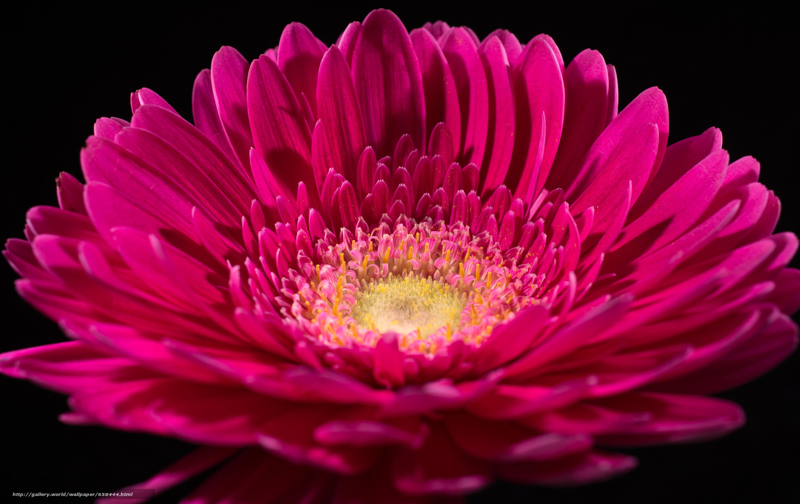 Скачать обои цветок,  цветы,  флора бесплатно для рабочего стола в разрешении 6000x3781 — картинка №658444