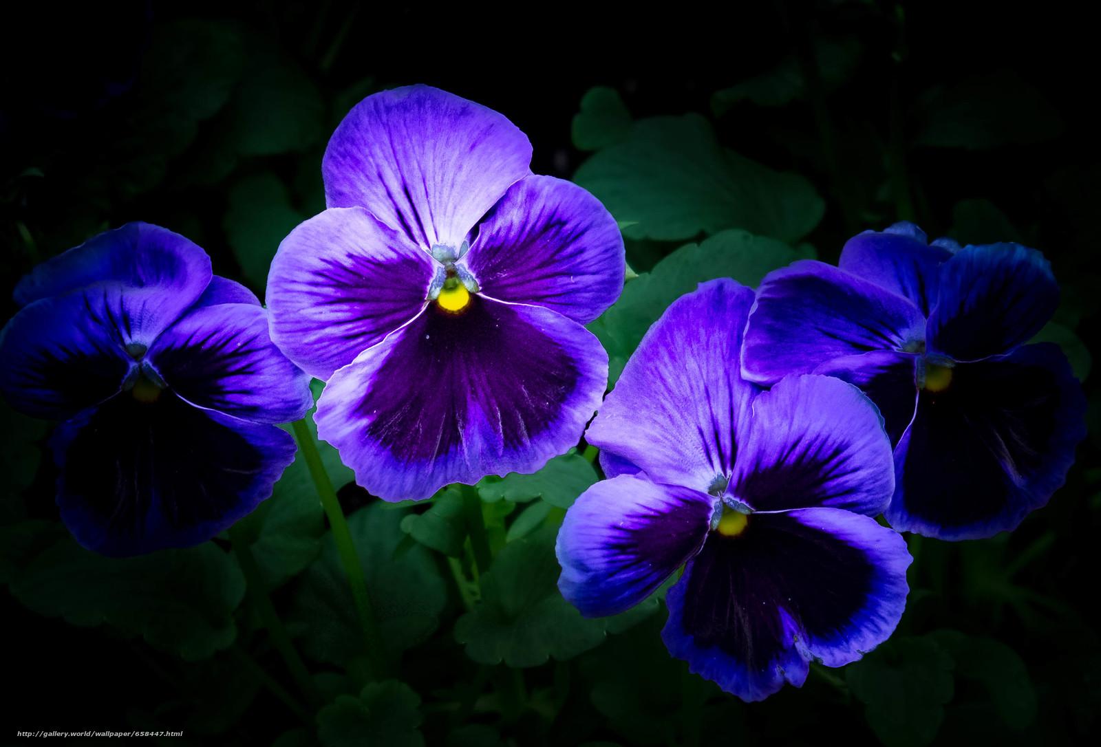 Descargar gratis flor,  Flores,  flora Fondos de escritorio en la resolucin 3090x2098 — imagen №658447