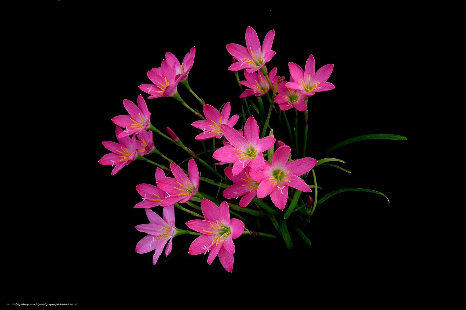 Скачать обои цветок,  цветы,  флора,  красивые цветы бесплатно для рабочего стола в разрешении 2048x1360 — картинка №658449