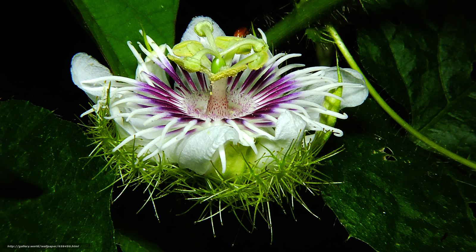 scaricare gli sfondi fiore,  Fiori,  flora Sfondi gratis per la risoluzione del desktop 4608x2442 — immagine №658450