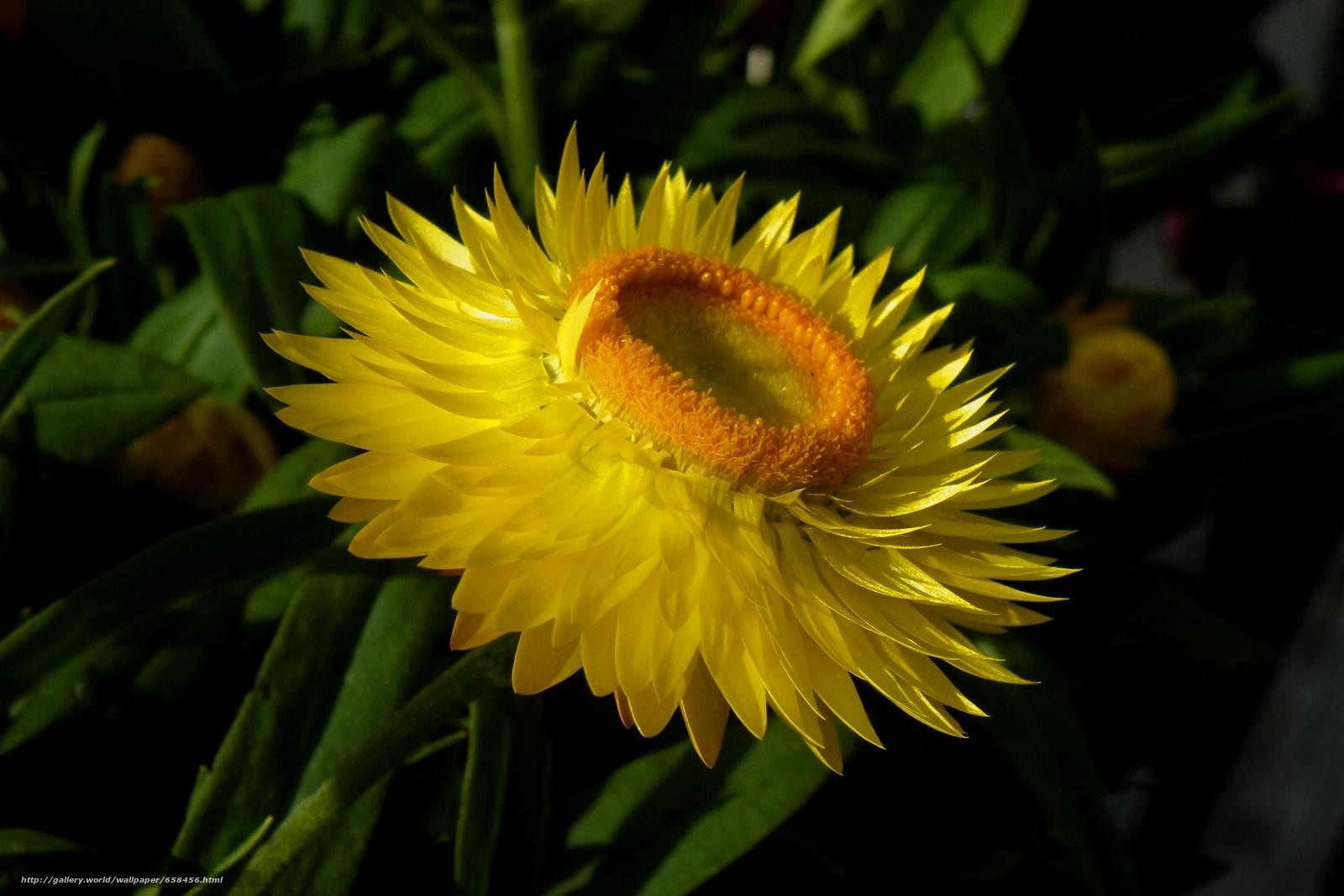 Скачать обои цветок,  цветы,  флора бесплатно для рабочего стола в разрешении 2820x1880 — картинка №658456