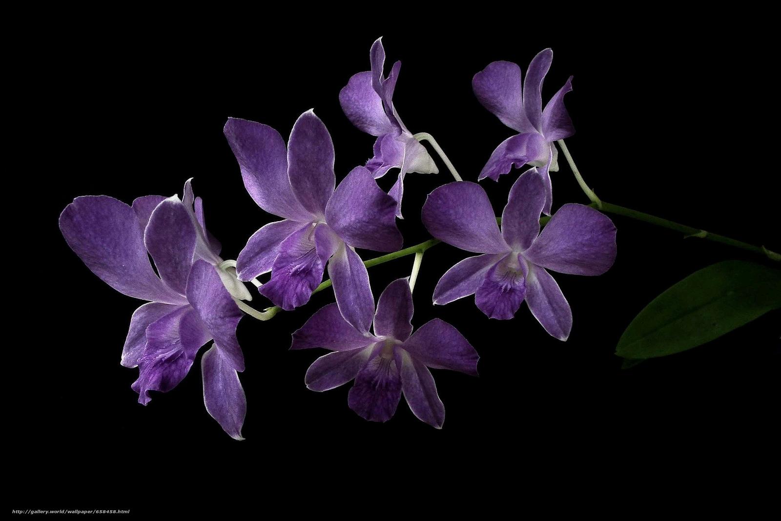 Download wallpaper flower,  Flowers,  flora free desktop wallpaper in the resolution 2448x1632 — picture №658458