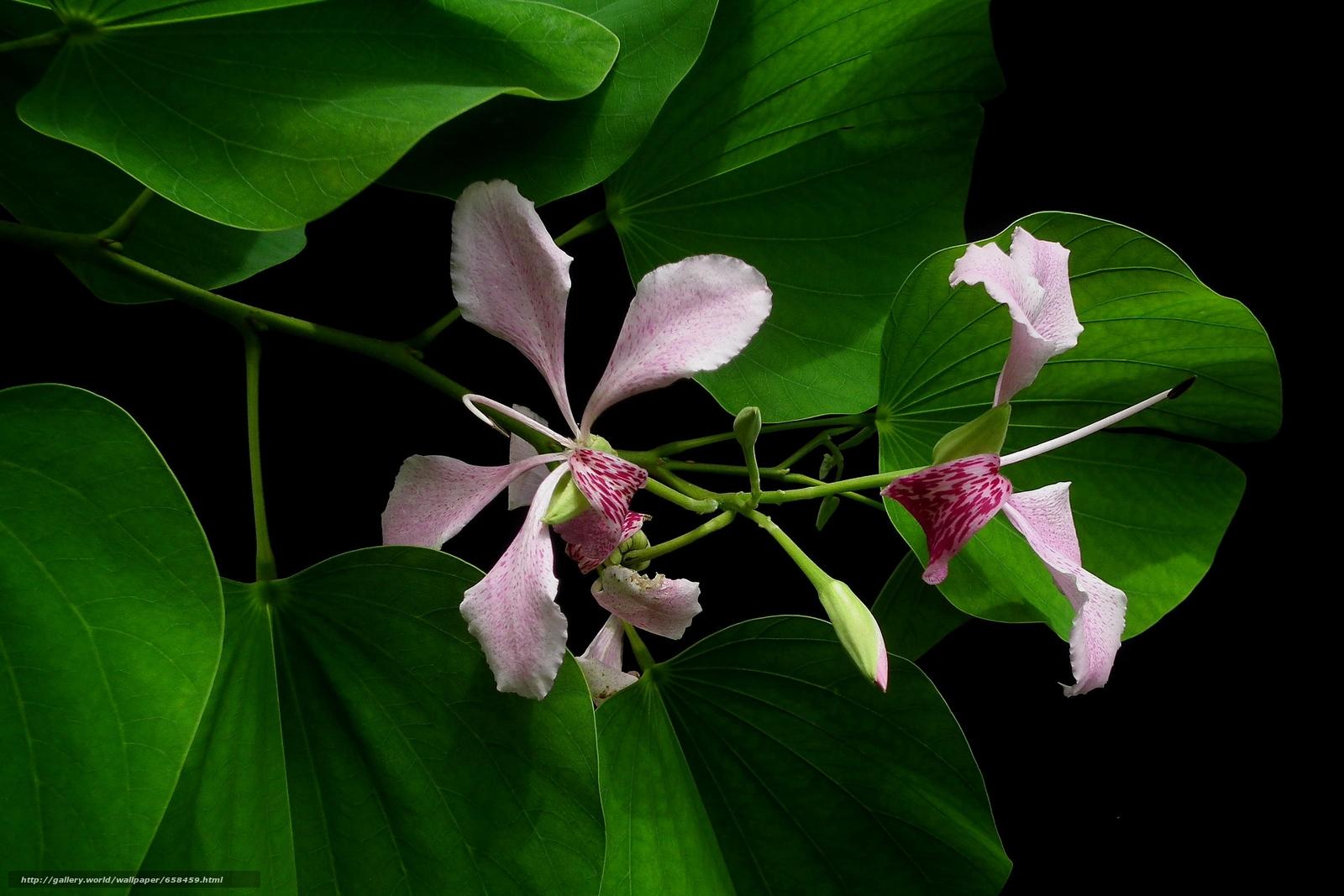 Скачать обои цветок,  цветы,  флора бесплатно для рабочего стола в разрешении 2400x1600 — картинка №658459