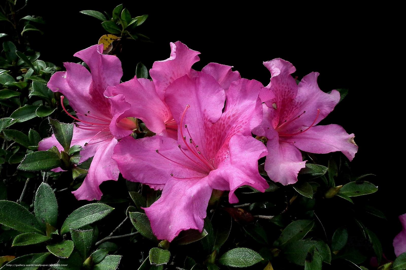 scaricare gli sfondi fiore,  Fiori,  flora Sfondi gratis per la risoluzione del desktop 1620x1079 — immagine №658460